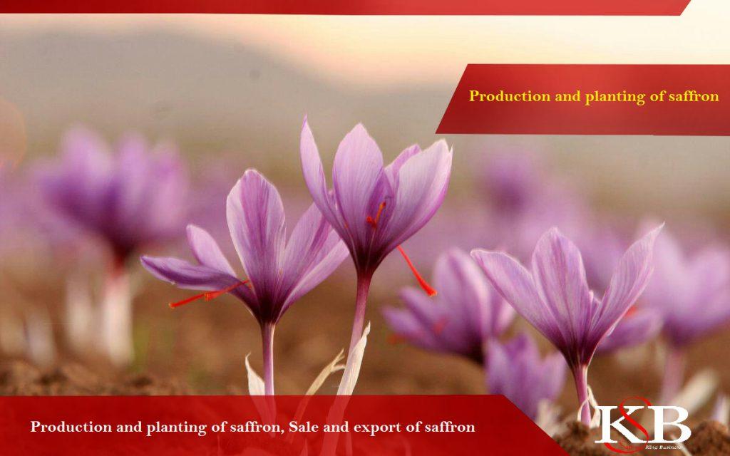 Advies bij het kopen van saffraan