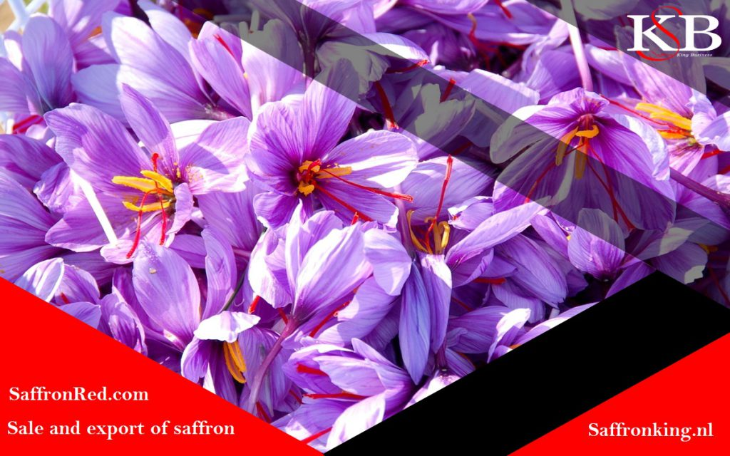 How quickly do saffron bulbs multiply?