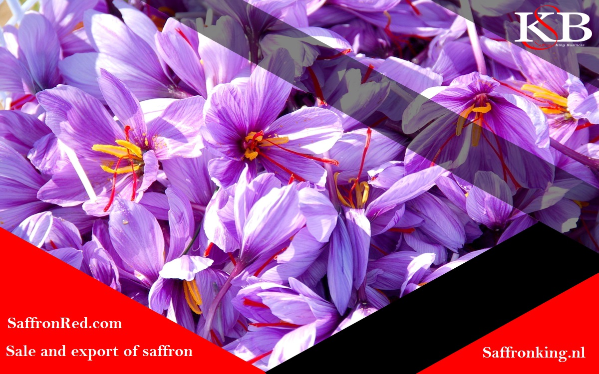 How to cooperate with Saffron king Business Company