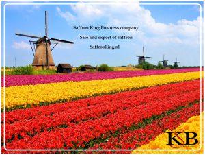 Major saffron sale in the Netherlands